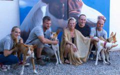 Dos podencos de Fundació Gossos encuentran un hogar en el evento solidario Passion 4 Podenco de P | Art Ibiza